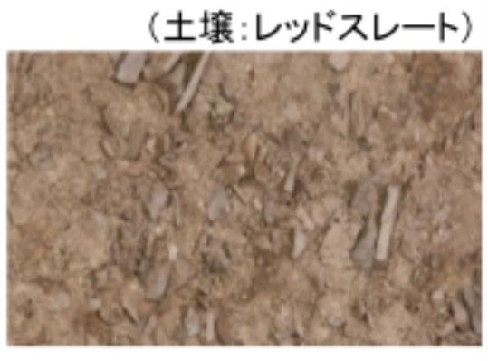 レッドスレート土壌